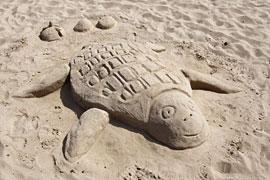Sandschildkröte