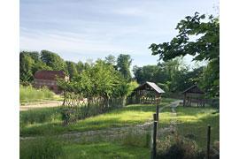 Lebender Zaun im Küchengarten Schloss Eutin