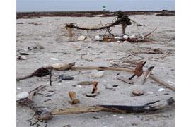 LandArt am Strand © Archiv LPV