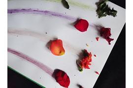 Malen mit Pflanzenfarben © Naturpark Holsteinische Schweiz