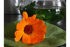 Ringelblume © Sabine Hönig