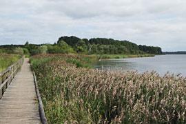 """Naturschutzgebiet """"Südlicher Priwall"""""""