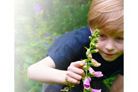 Fingerhut – wunderschön, aber mit Vorsicht zu behandeln. © Regionalverband Umweltberatung Nord e.V.