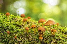 Pilze © VDN/Hubert Gerweck