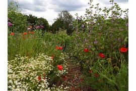 insektenfreundlicher Garten des LPV © Sylvia Behrens