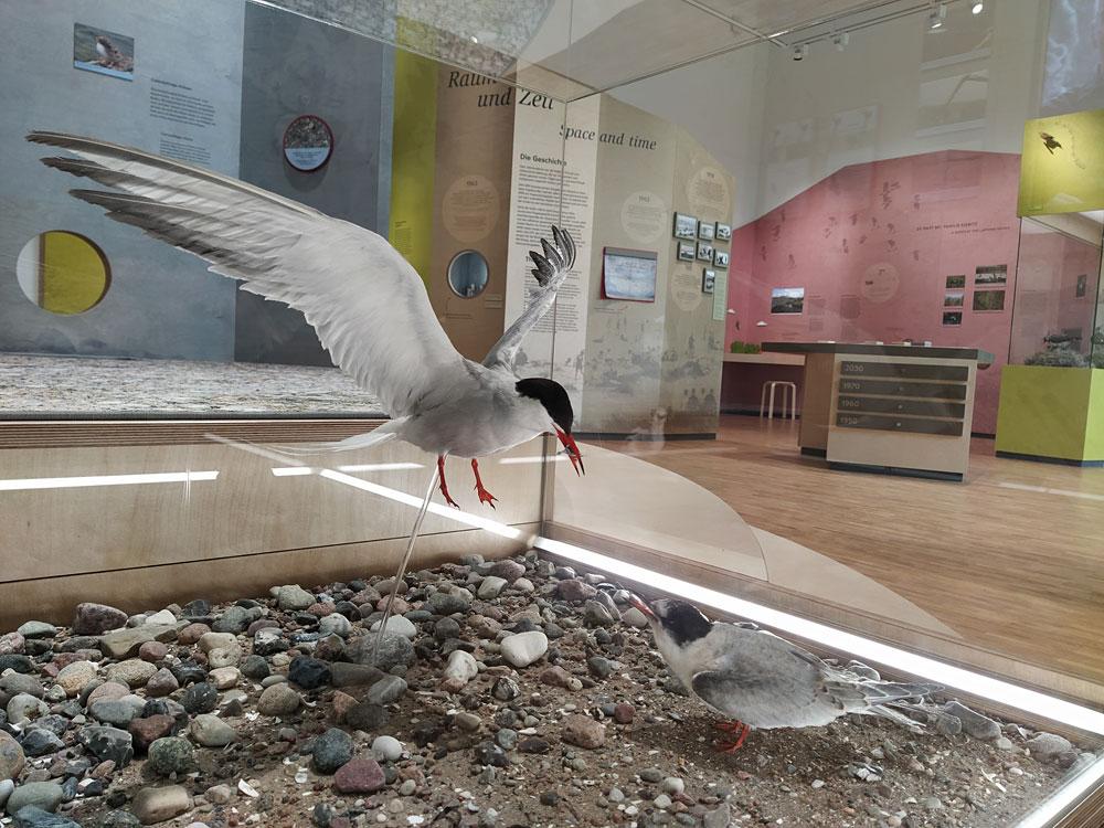 """Ausstellung """"Vogelleben zwischen Fluss und Meer"""" in der Naturwerkstatt Priwall © LPV"""