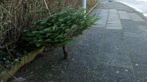Weihnachtsbaumentsorgung in Travemünde 2021
