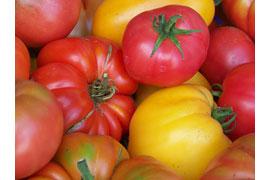 Tomaten © Anja Christiansen
