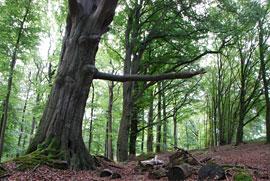 Bäume © M. Wenzel